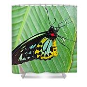Male Cairns-birdwing Butterfly Shower Curtain