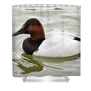 Male Canvasback Duck  Shower Curtain