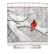 Male Cardinal In Snow Shower Curtain