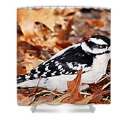 Male Downy Woodpecker 4 Shower Curtain