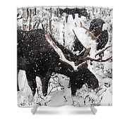Male Moose Grazing In Snowy Forest Shower Curtain