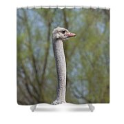 Male Ostrich Shower Curtain