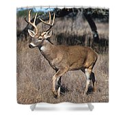 Male White-tailed Deer Shower Curtain
