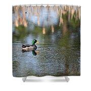 Mallard - Duck - Lonely Guy Shower Curtain