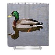 Mallard 1 Shower Curtain
