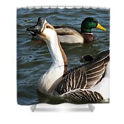 Mallard And Chinese Swan Goose - Anser Cygnoides - Featured In Wildlife Group Shower Curtain