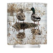 Mallard Ducks Standing On A Rock Shower Curtain