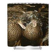 Mallard Ducks Underwater Shower Curtain