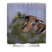 Mallard Perfection Shower Curtain