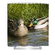 Mallards Nesting Shower Curtain