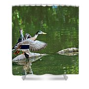 Mallards Taking Off Shower Curtain