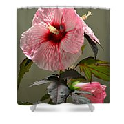 Mallow Hibiscus Shower Curtain