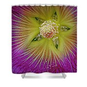 Malva Middle Shower Curtain