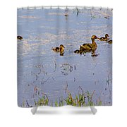 Mama Duck And The Kiddies Shower Curtain
