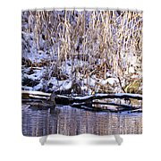 Mama Duck On Patrol Shower Curtain
