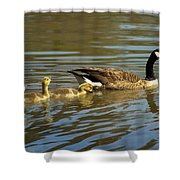 Mama Honker And Goslings Shower Curtain