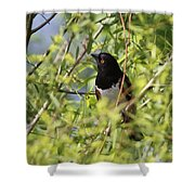 Man Of The Willows Shower Curtain