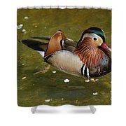 Mandarin Duck Shower Curtain