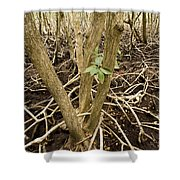 Mangrove Forest With Red Mangrove Shower Curtain