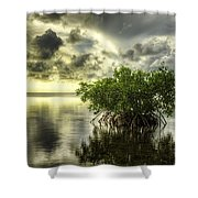 Mangroves I Shower Curtain