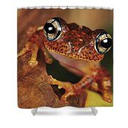 Mantellid Frog Boophis Tephraeomystax Shower Curtain