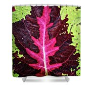 Many Leaves Of Coleus Shower Curtain