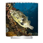 Map Pufferfish, Indonesia Shower Curtain