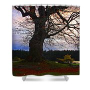 Maple Evening Shower Curtain