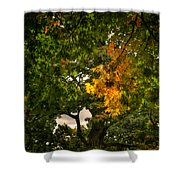 Maple In Oak Grove Shower Curtain