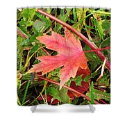 Maple Leaf Forever Shower Curtain