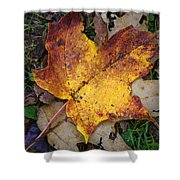 Maple Leaf In Fall Shower Curtain
