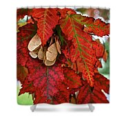 Maple Leaves And Seeds Shower Curtain