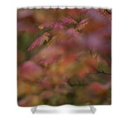 Maple Leaves Are Bright Red On A Rainy Shower Curtain