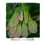 Maple Seed Shower Curtain