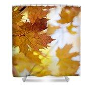 Maple Tree In Autumn Shower Curtain