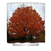 Maples In The Meadow Shower Curtain