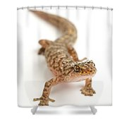 Marbled Gecko Sitting In Studio Looking Shower Curtain
