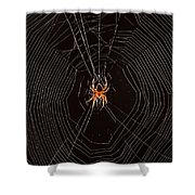 Marbled Orb Weaver Spider Shower Curtain