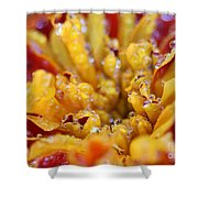 Marigold With Water Drops Shower Curtain