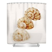 Marine Snails Shower Curtain