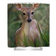 Marsh Deer Blastocerus Dichotomus Shower Curtain