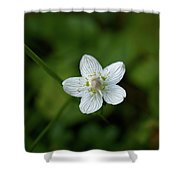 Marsh Grass-of-parnassus Shower Curtain
