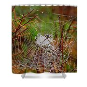 Marsh Spider Web Shower Curtain