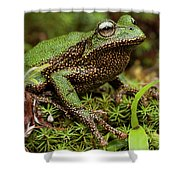 Marsupial Frog Gastrotheca Sp, A Newly Shower Curtain