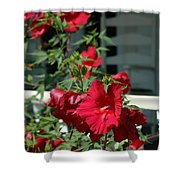 Martha's Vineyard Red Hibiscus And Porch Shower Curtain