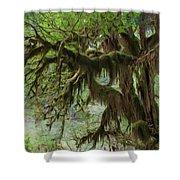 Marvelous Moss Shower Curtain