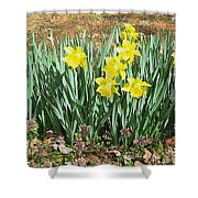 Mary's Daffodils Shower Curtain