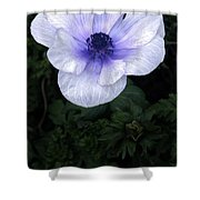 Mascara And Lace Anemone Shower Curtain