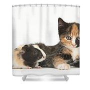 Matching Kitten & Guinea Pig Shower Curtain