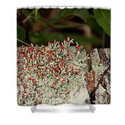 Matchstick Lichen Shower Curtain